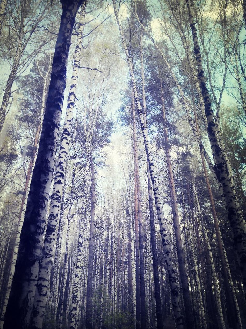 Forest Siberia Natural