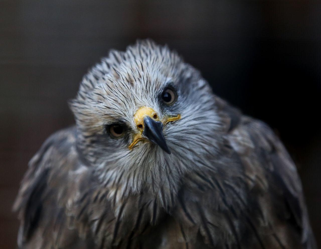 Beautiful stock photos of birds, Animal Themes, Beak, Bird, Day