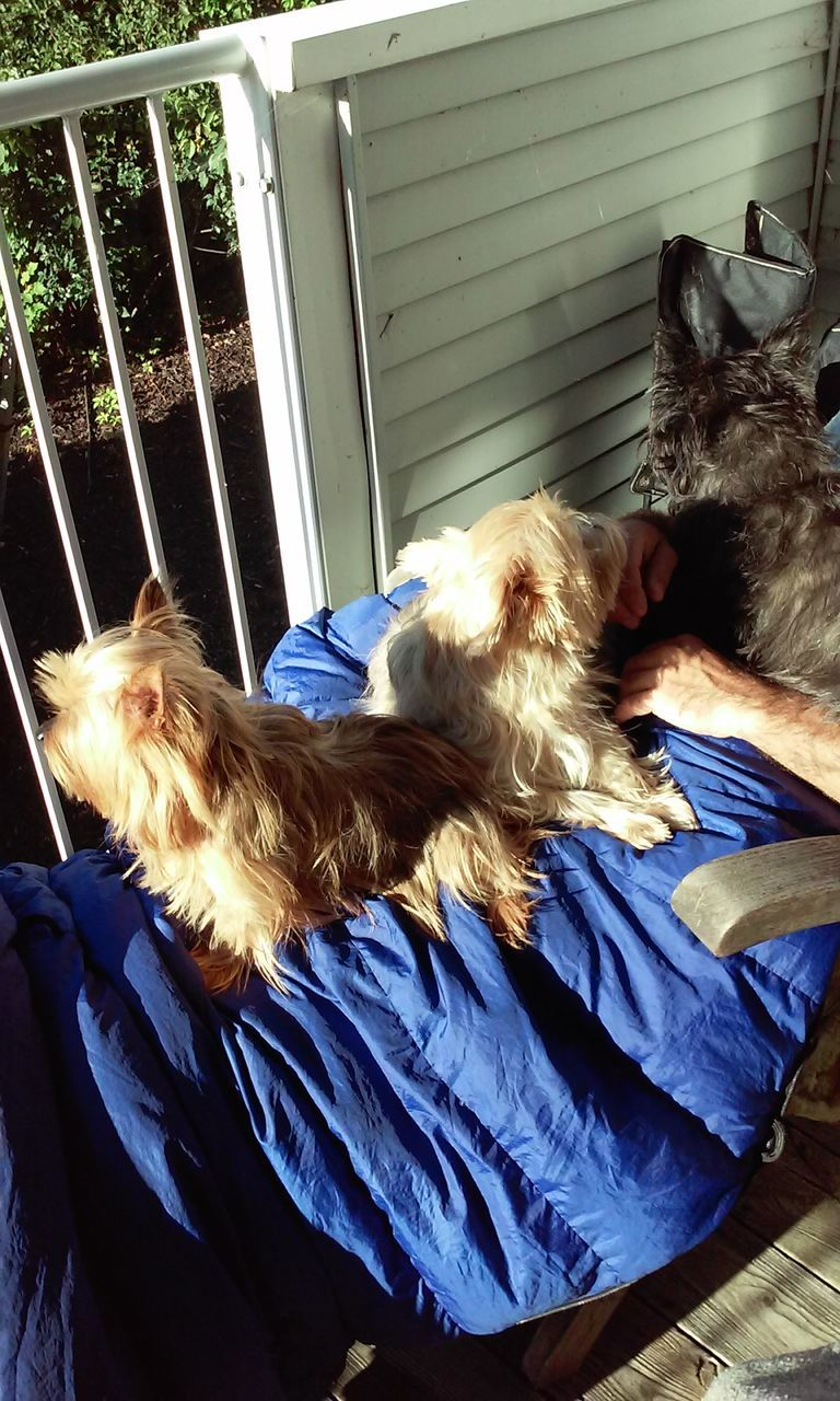 pets, dog, domestic animals, mammal, one animal, one person, day, sunlight, real people, relaxation, women, indoors, blond hair, people