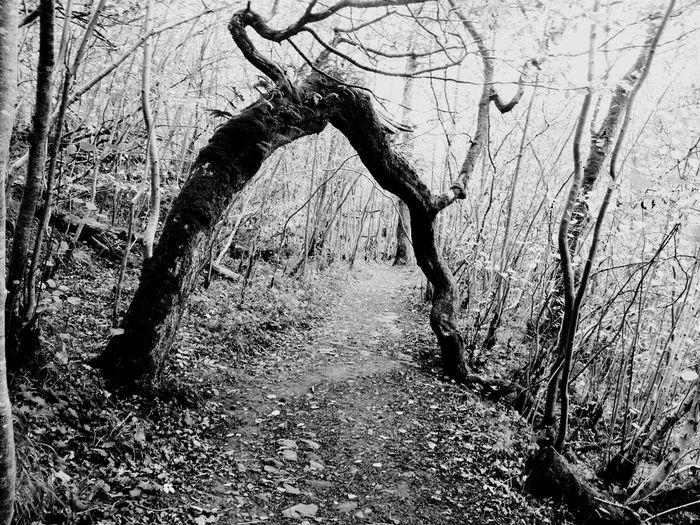 Bedlington Waterfall Walk Tree Arch Tree And Sky Tree Trunk Tree_collection  EyeEm Best Shots Dogwalking Iphone 6 Monochrome Monochromatic Black And White EyeEm Gallery Showcase: February