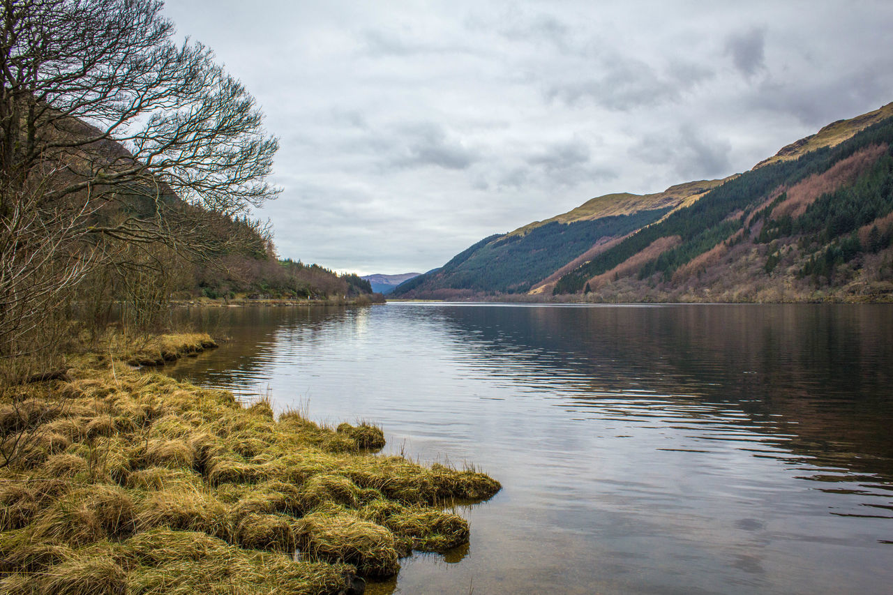 Beautiful stock photos of scotland, Bare Tree, Calm, Cloud, Day