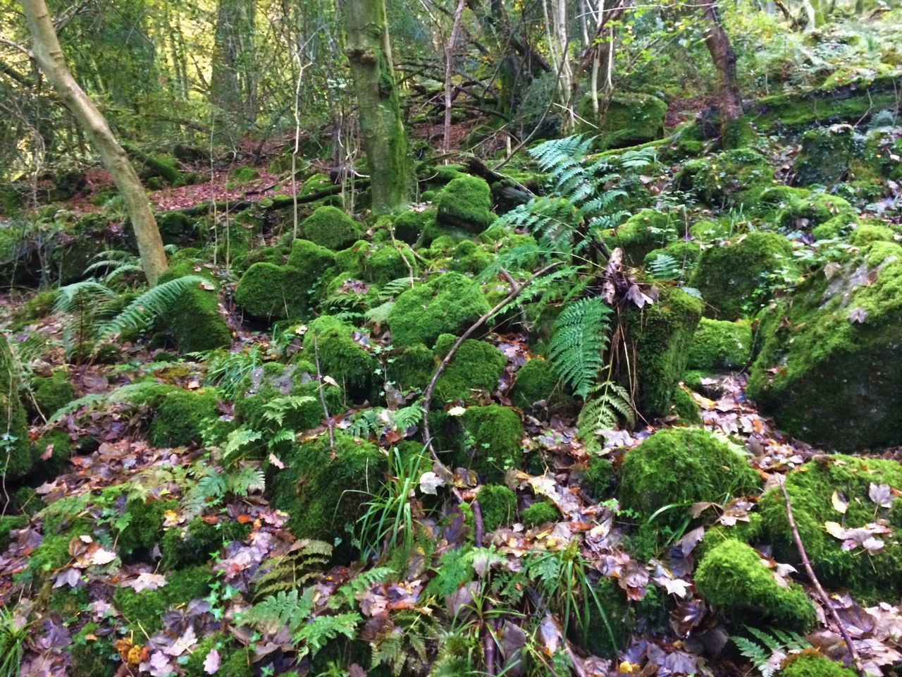 Forest Green Color Growth Moss Nature No People Outdoors Plant Scenics Stones Tranquility Tree