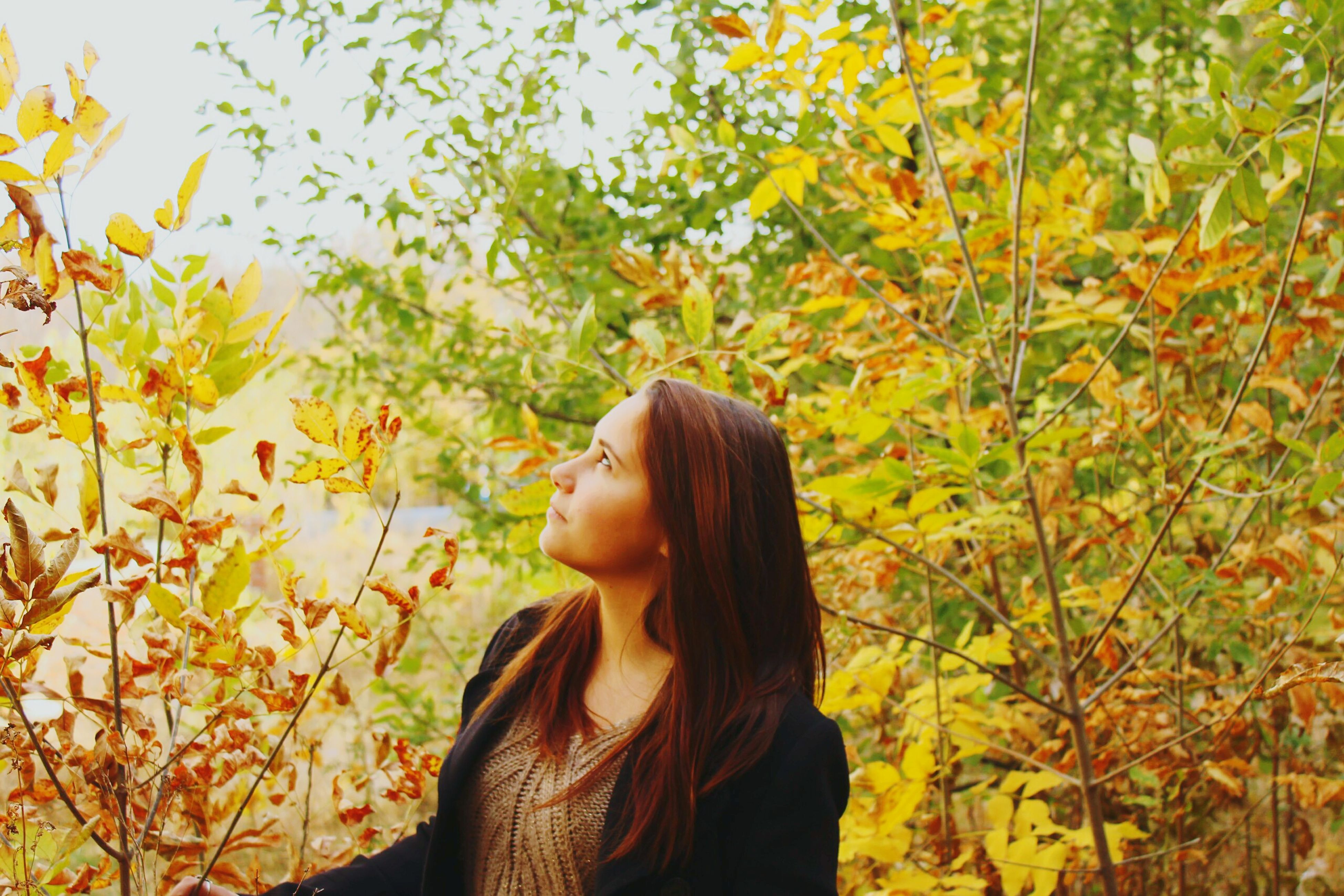 young adult, long hair, young women, tree, lifestyles, person, yellow, leisure activity, leaf, casual clothing, standing, waist up, growth, nature, headshot, brown hair, autumn