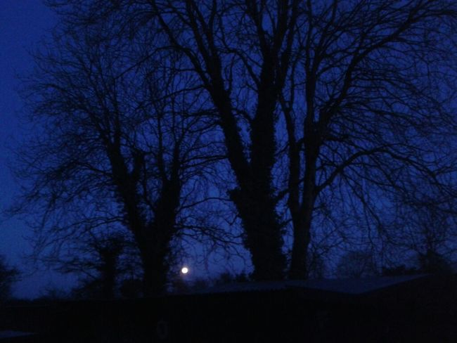 moon, moon, here she comes (ye'all can start howling now) #trees Howling At The Moon No Edit/no Filter #horizon #amlp #skies
