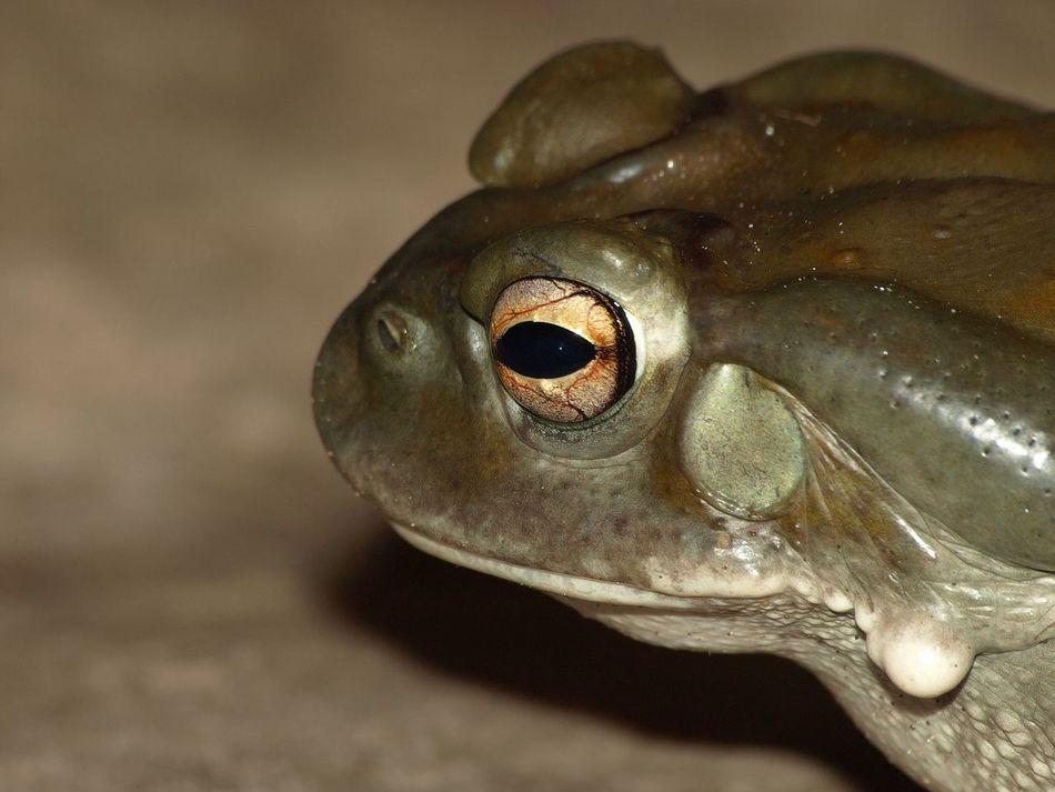 Beautiful stock photos of frog, Animal Body Part, Animal Head, Animal Themes, Animals In The Wild