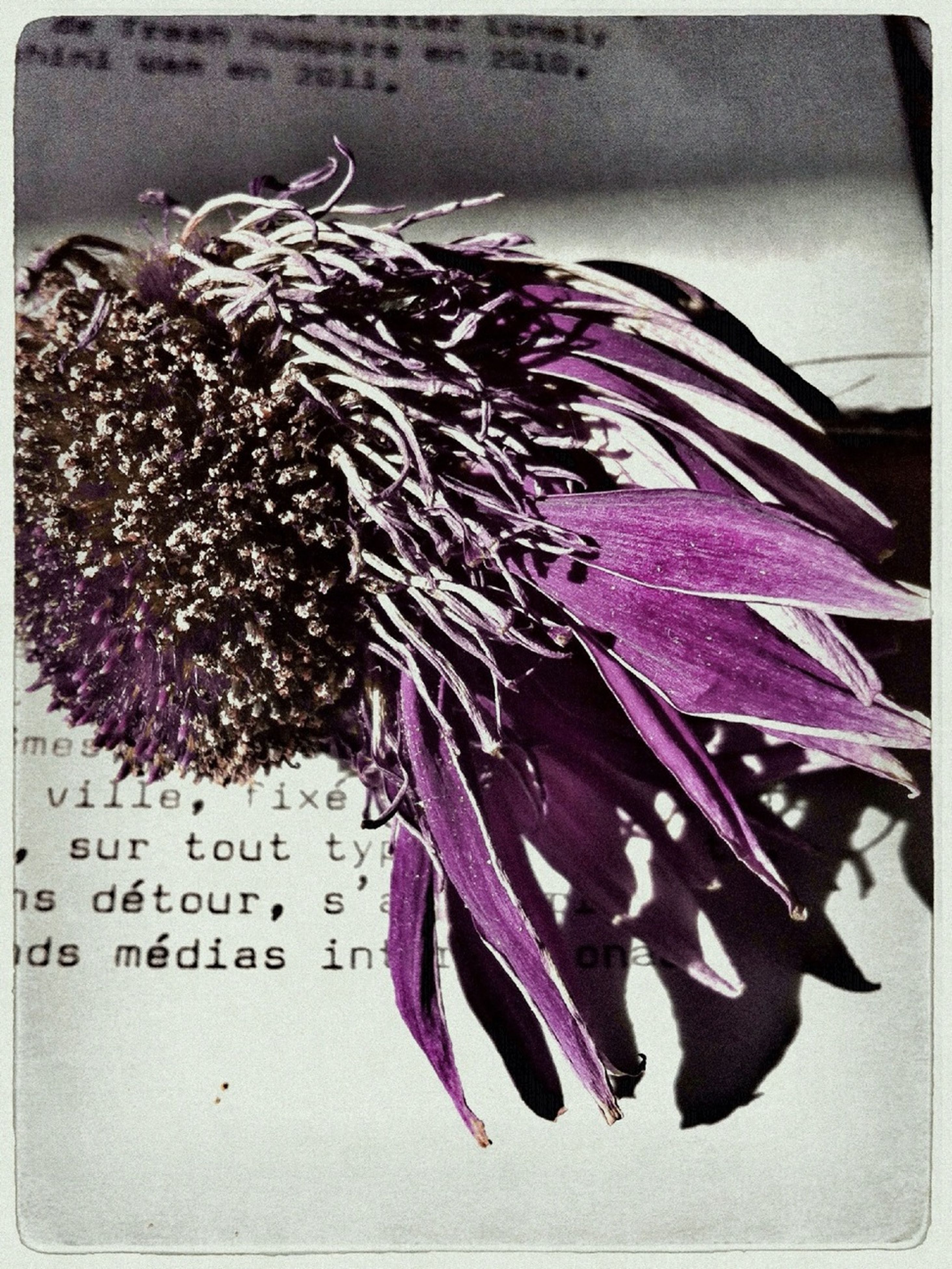 transfer print, close-up, auto post production filter, still life, indoors, flower, purple, no people, high angle view, variation, table, art and craft, multi colored, freshness, large group of objects, creativity, sharp, paper, spiked, day