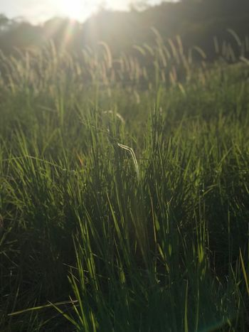 Grass Sunset Perspectives On Nature