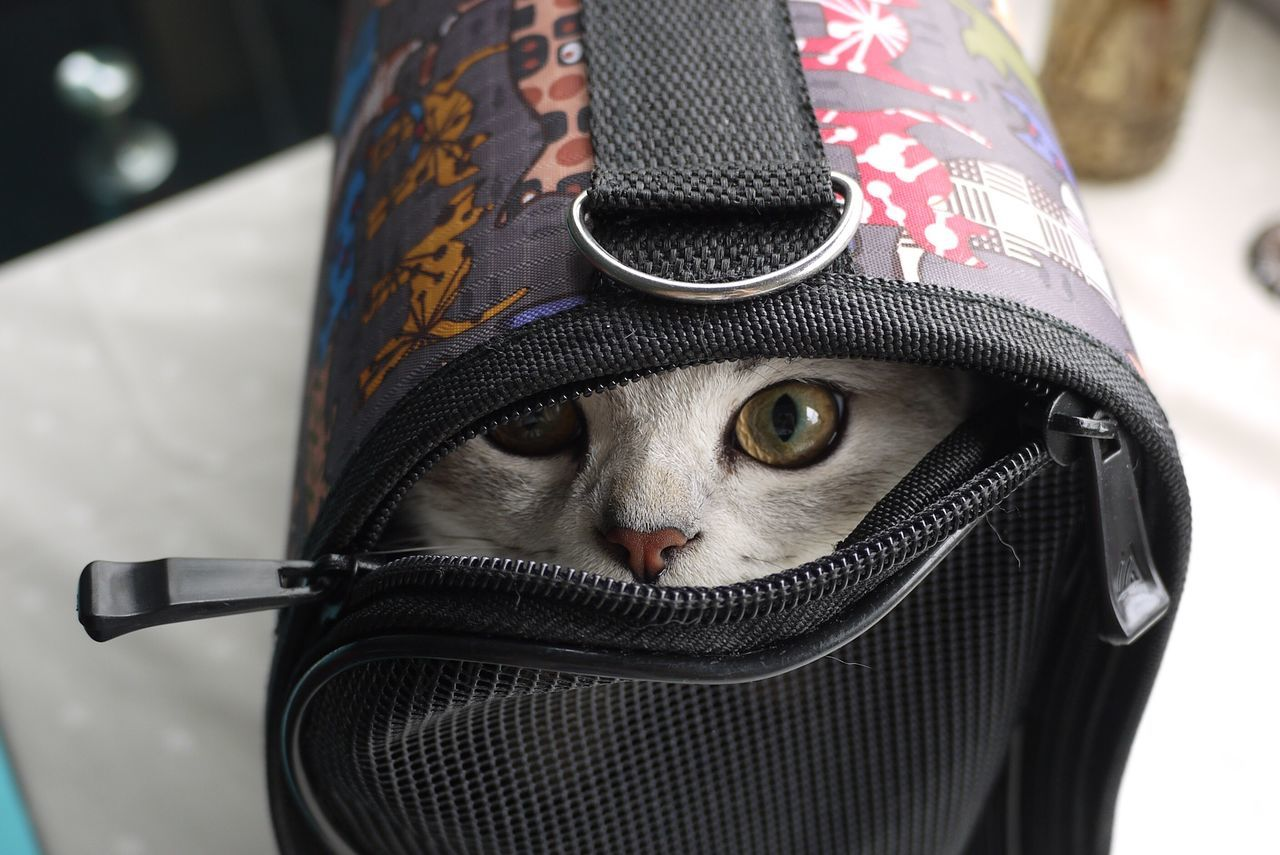 Cat Lovers Animal Eyes Cat Fox Takeaway Bag Pet 6mths In The Bag