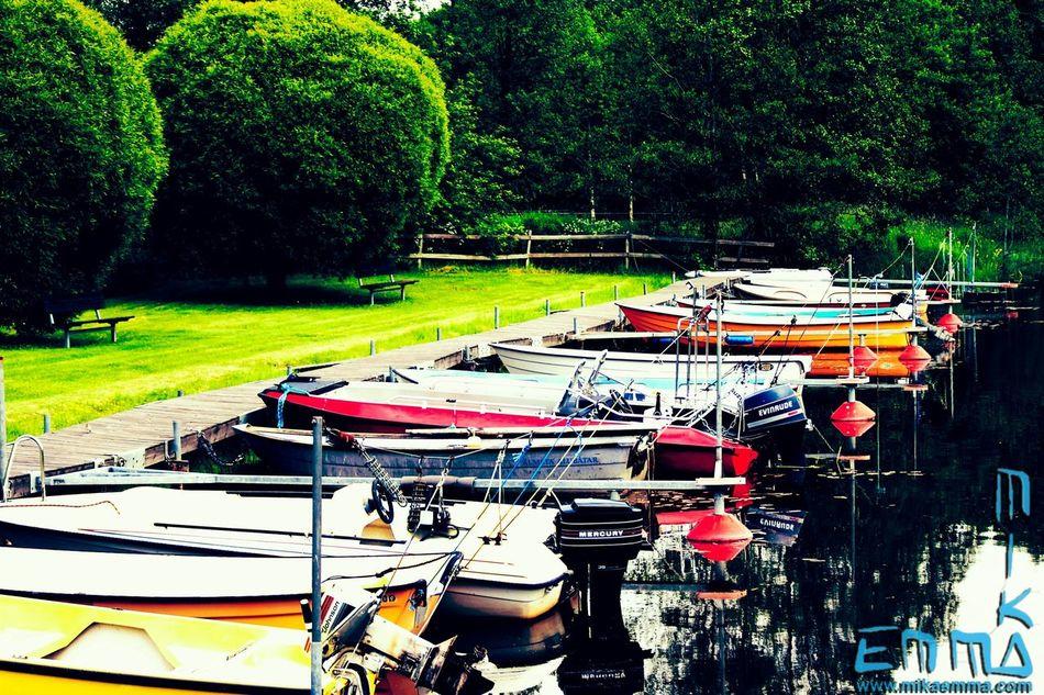 Johnson Evinrude Mercury Boats Trees Nature