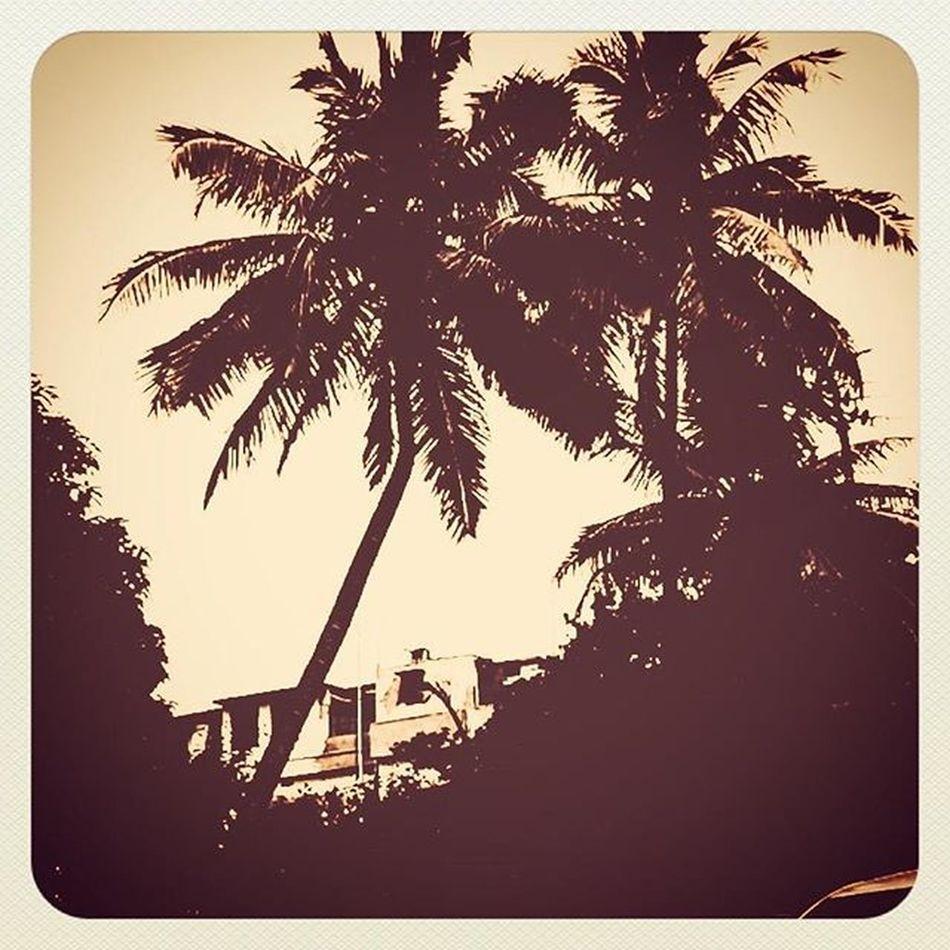Sepia Trees Palmtrees Apictureisworthathousandwords Tuesdaytrials Exploring Experimenting Amateur Photographer Clickhappy Bbsr Bhubaneswar Treesarelife Talltrees Odisha India Toomanyhashtags Nomorehashtags