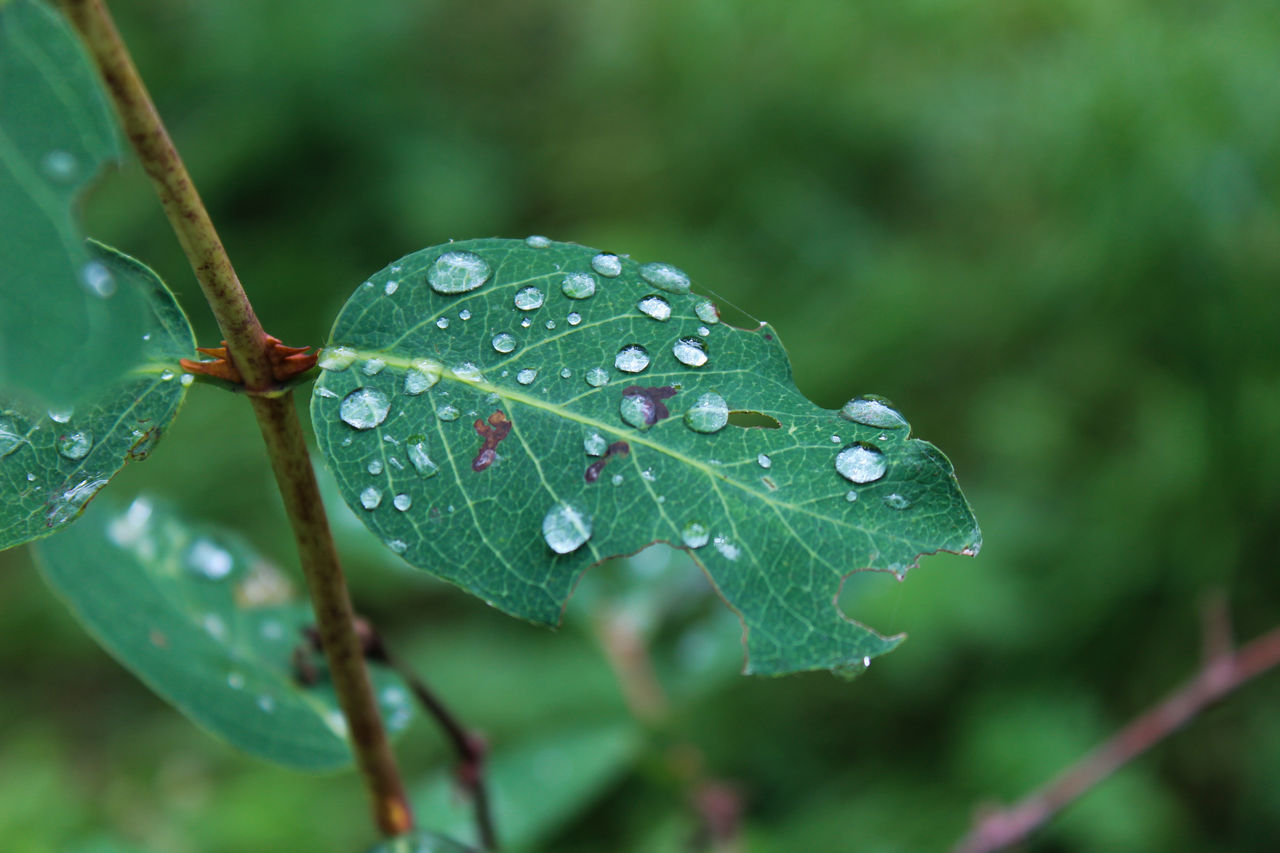 Delicate like drops on a leaf Leaf After The Rain Drops Forest Rain The Great Outdoors - 2016 EyeEm Awards