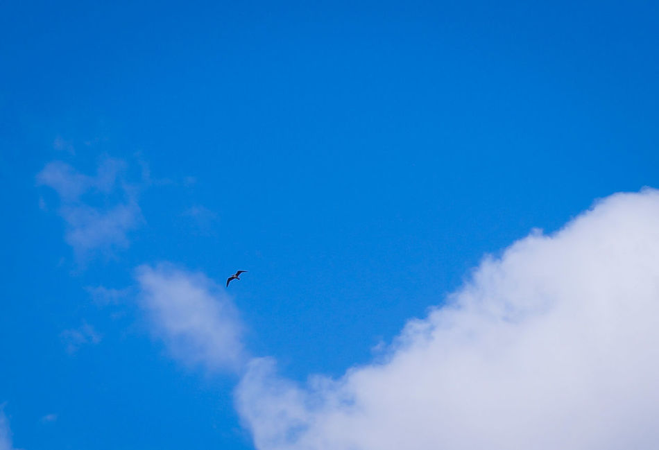 Up Above away from your BULLSHIT you so called Humans 🐦 Flying Bird Low Angle View Blue Sky Midair Nature Shades Of Blue MnMl Mnmlsm Minimalism Minimal Minimalistic Minimalmood Minimalist Minimalobsession Minimalart Minimalarchy Birdphoto One Bird In Harmony With Nature One Step Beyond Mobilephotography
