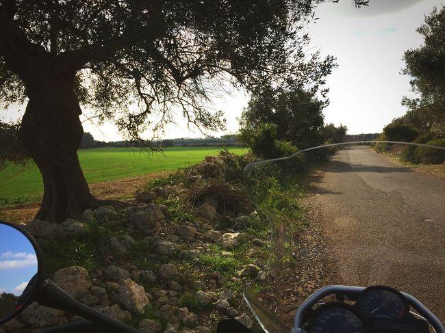Apúlia Tarantoprovince Enjoying Life Relaxing Green Green Green!  Hello World Taking Photos Stone Tree