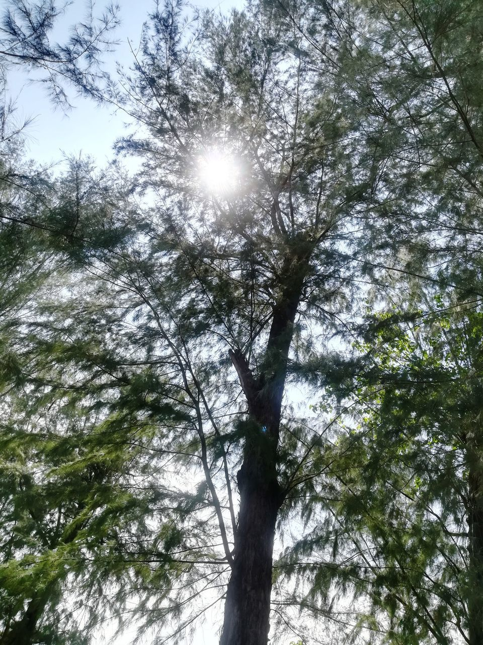 low angle view, tree, nature, sunlight, outdoors, day, forest, tree trunk, no people, scenics, beauty in nature, tranquility, growth, branch, sun, sky