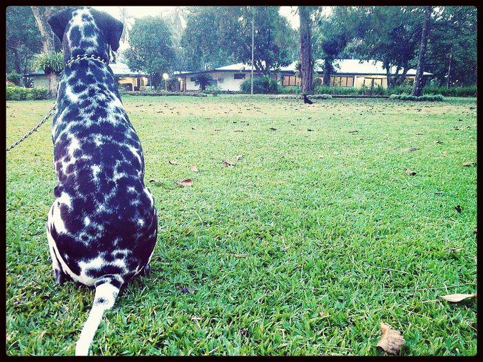 i wanna go home..♡Dogsitting Distance Dog Doglover