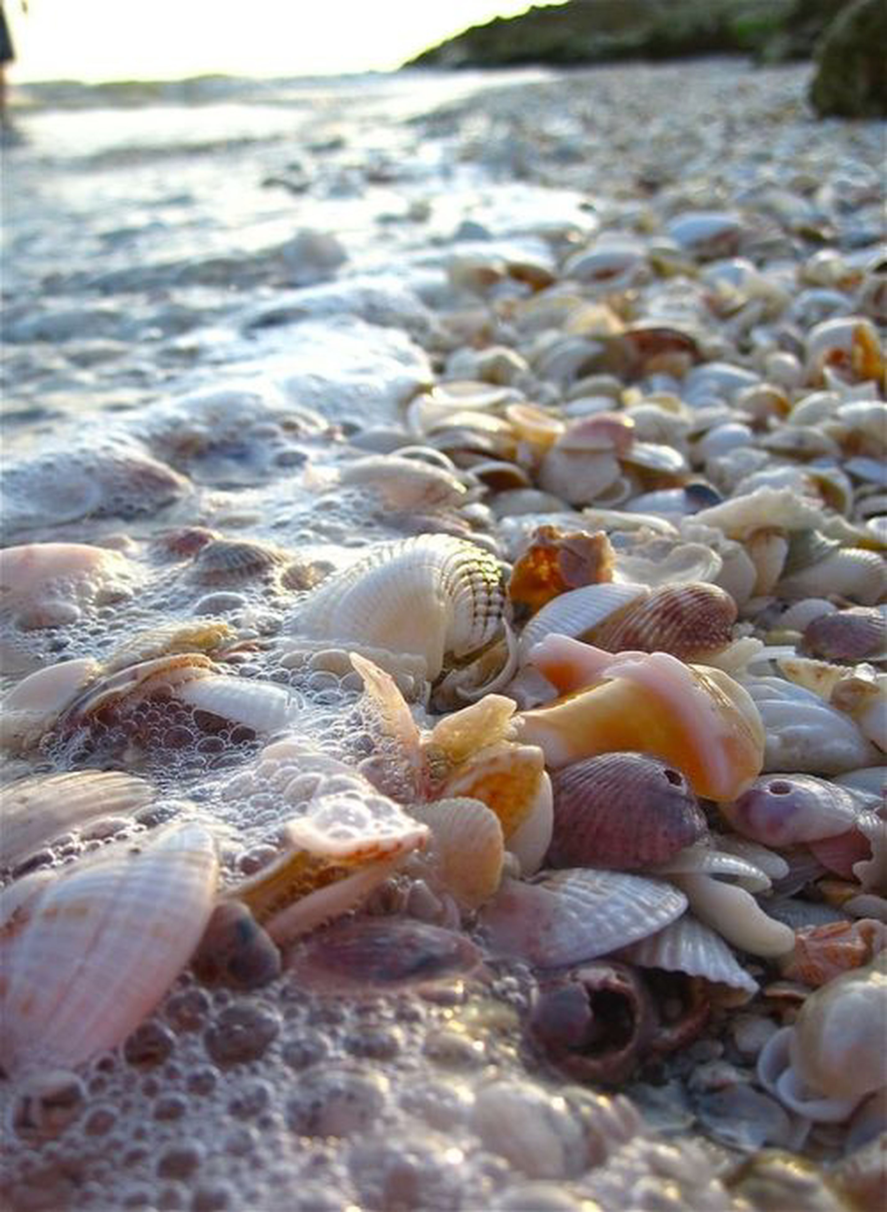 beach, sand, nature, water, shore, sea, pebble, seashell, tranquility, close-up, stone - object, focus on foreground, beauty in nature, rock - object, shell, day, selective focus, surface level, animal shell, outdoors