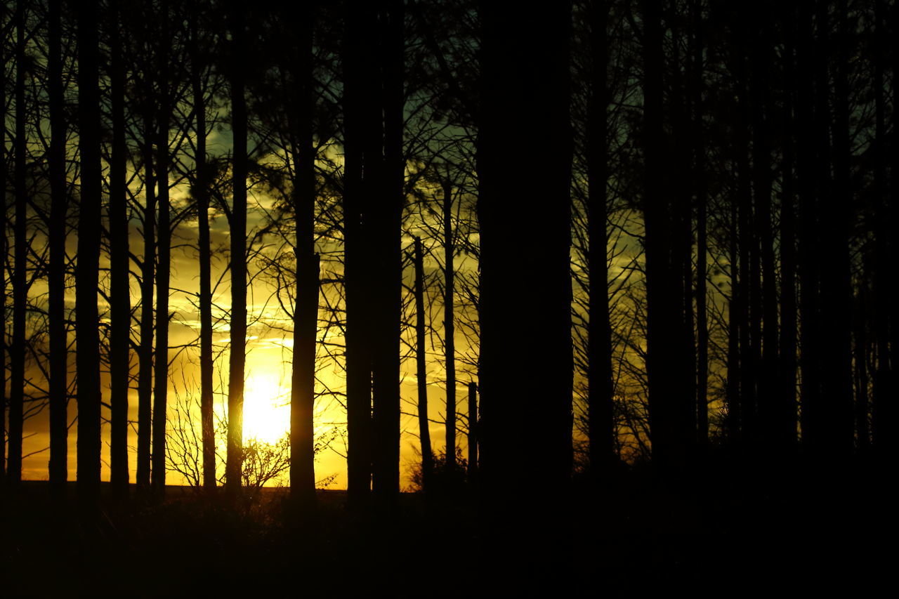 Outdoors Sunset Tree Nature Silhouette Backgrounds Beauty In Nature Growth Scenics Forest Landscape Sky No People Sun Day