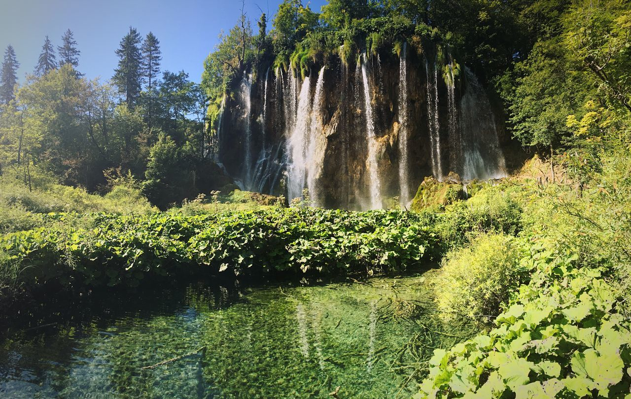 waterfall, nature, water, beauty in nature, tree, scenics, plant, growth, motion, forest, green color, day, no people, outdoors, landscape
