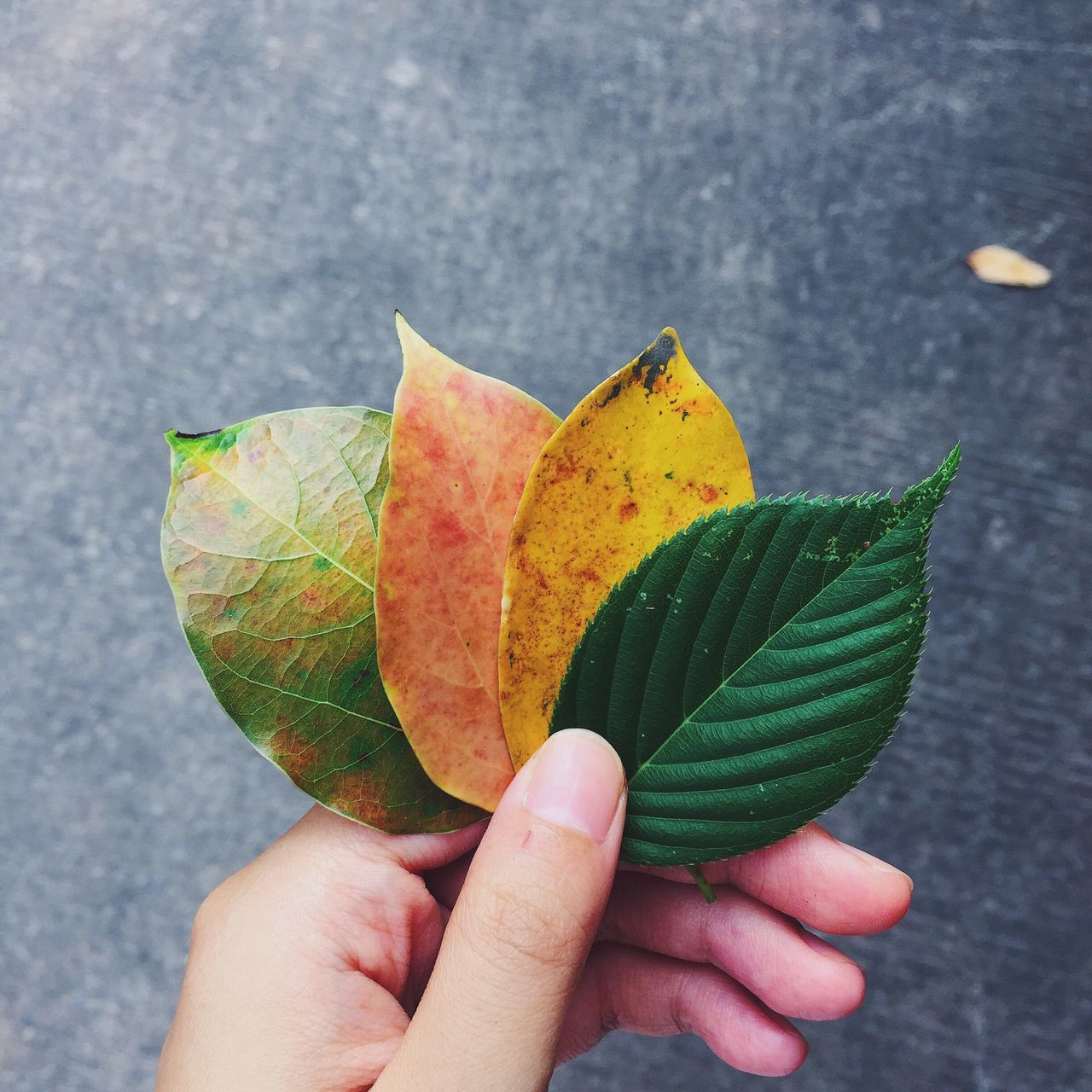 four color leaves. The Great Outdoors - 2016 EyeEm Awards The Essence Of Summer EyeEm Gallery Capture The Moment Eye4photography  Beauty In Nature From My Point Of View EyeEm Nature Lover EyeEmbestshots Taking Photos Enjoying Life Hello World Summertime Summer Beauty In Ordinary Things No People Leaves_collection Yellow Green