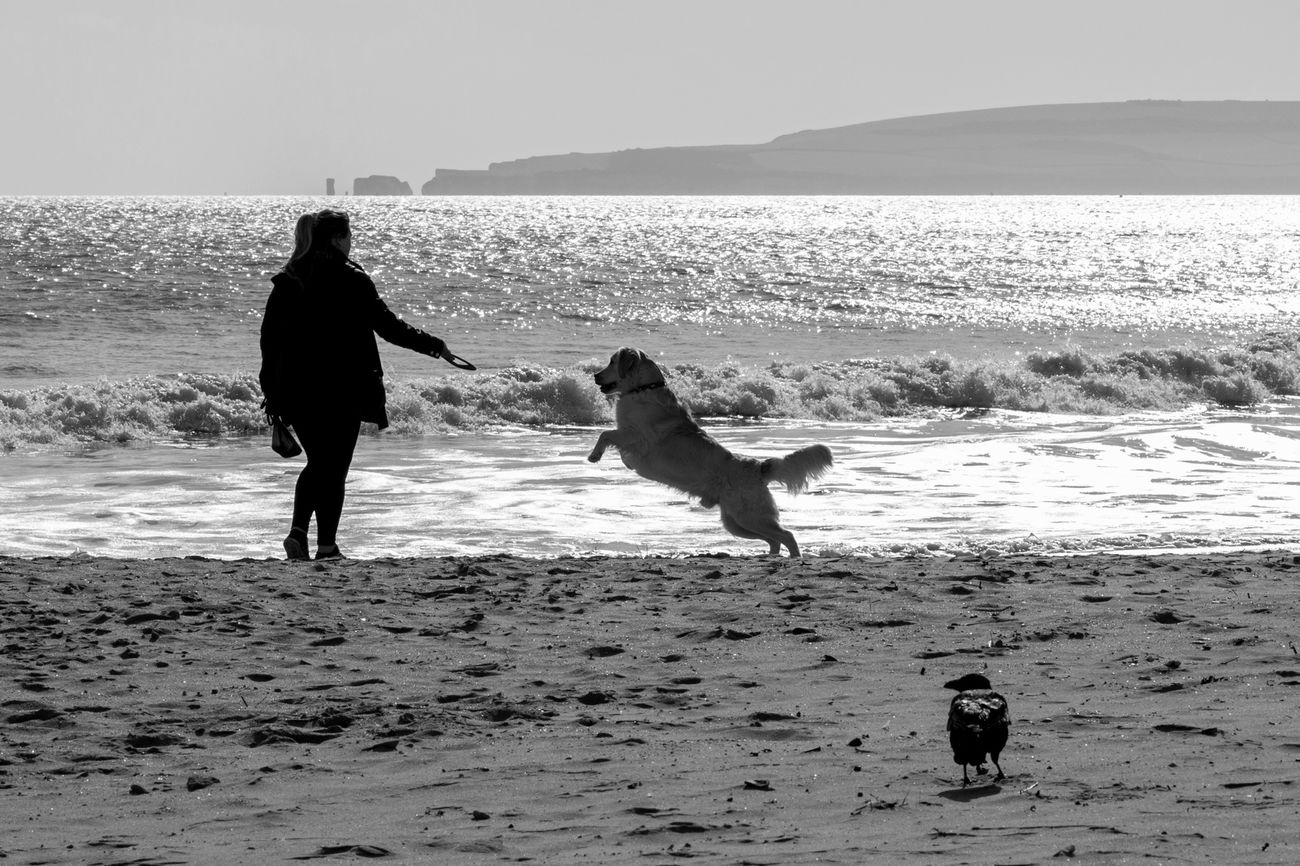 Branksome Beach. Dog Walking Beach Photography Poole Black & White Dorset