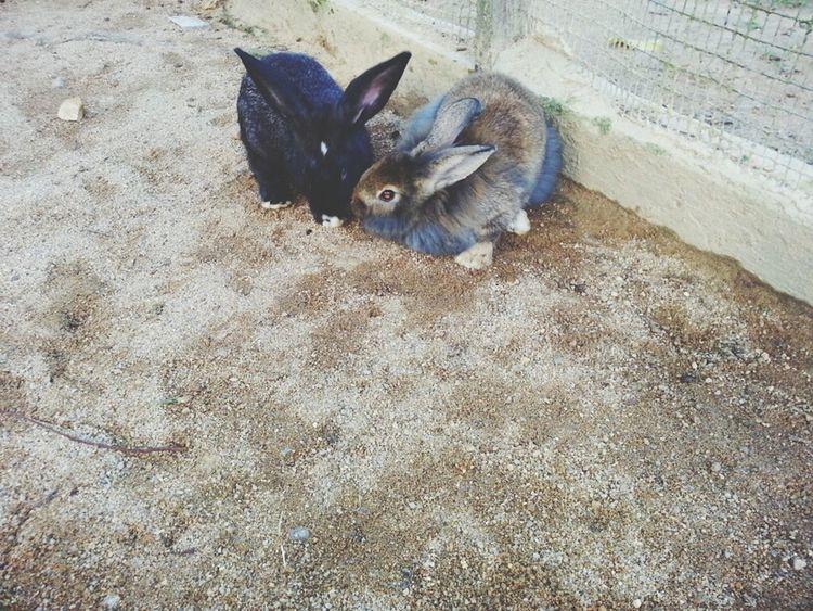 Bonding time Rabbits Animal Park