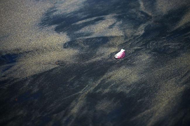 Solo shell Black Sand Beach Classic Fineart_photo Minimalism Mirrorlessrevolution Sand Seaside Shells Solo Washout