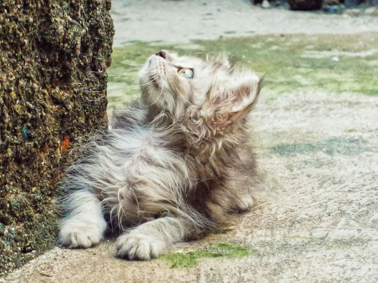 Baby's day out Curious Cat Lookingup Cats Cute Pets Animal Themes One Animal Animal Pet Pets Portrait Of Innocence Portrait Color Portrait My Muse My Cat Kitten Check This Out Cute Eyes No People Outside Outdoors Jakarta INDONESIA
