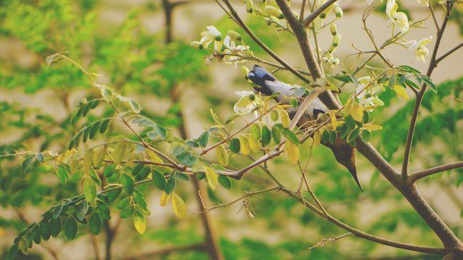 Hummingbird Humming Birds Hummingbirds Flowers Birds🐦⛅ Bird On A Branch Bird On A Tree Beautiful Birds Nature Photography Beauty In Nature Beautiful Nature My Perspective From My Point Of View Hello World Check This Out Taking Photos EyeEm Best Shots EyeEm Gallery EyeEm Masterclass India ASIA The Great Outdoors - 2016 EyeEm Awards