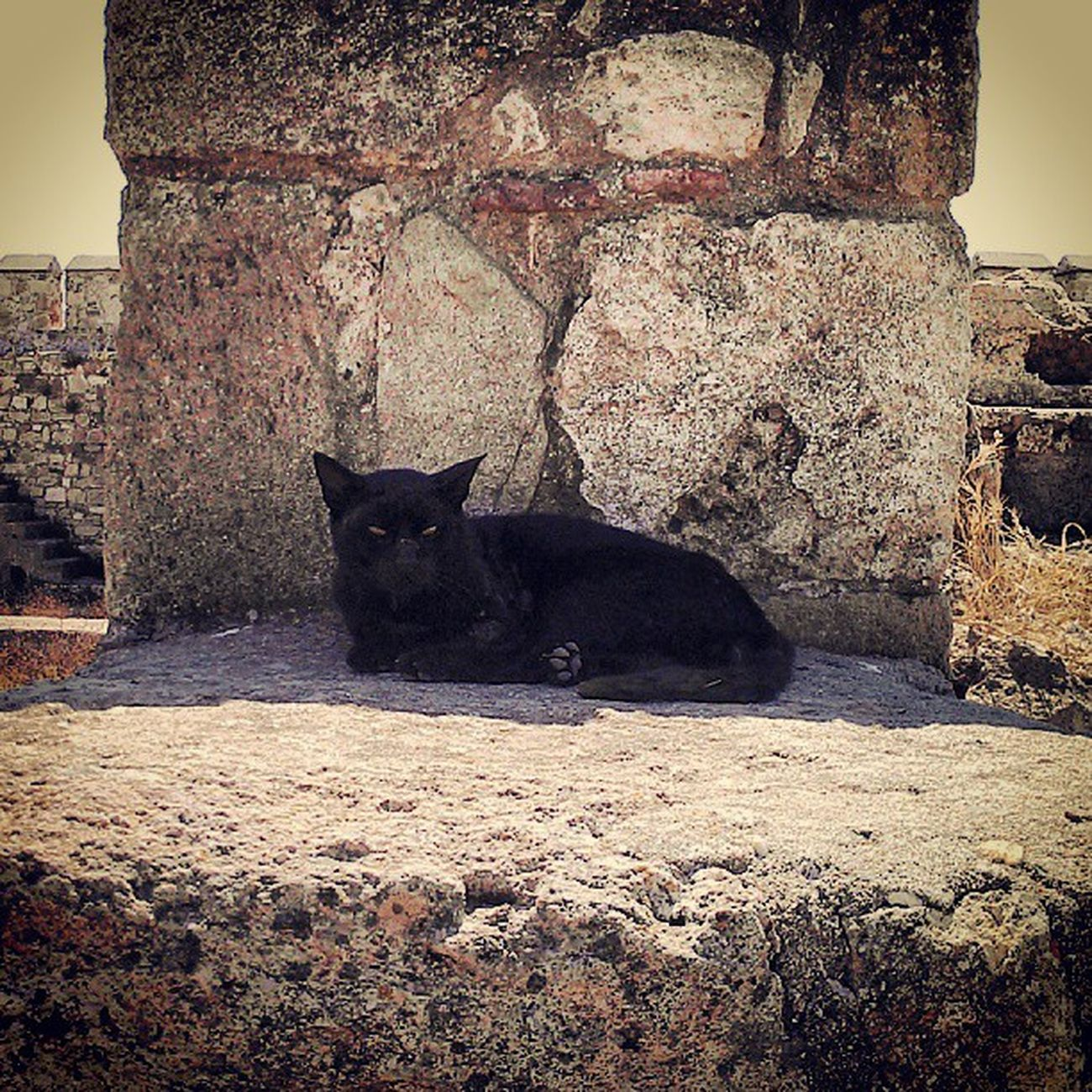 Kale pisisi Candostu Cat Cats Catsofinstagram catlovers