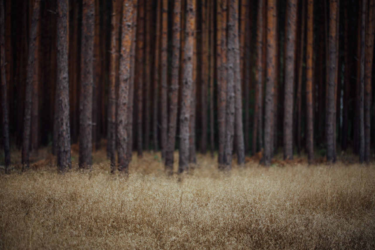 Beautiful stock photos of fall, tree, nature, forest, no people