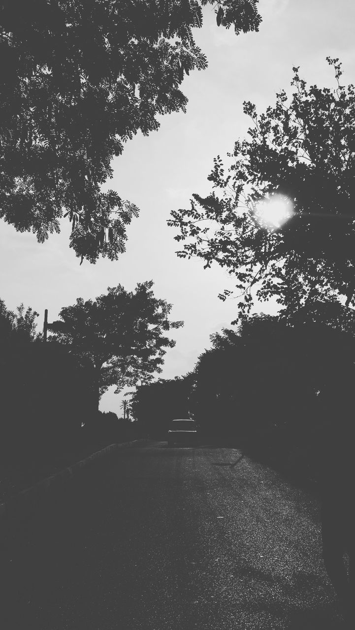 tree, road, the way forward, silhouette, no people, nature, landscape, growth, day, outdoors, sky, beauty in nature