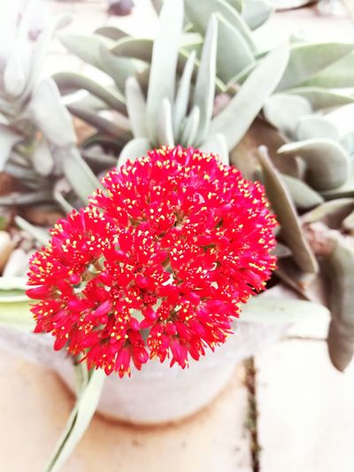 EyeEmNewHere Flower Beauty In Nature Flower Head No People Nature