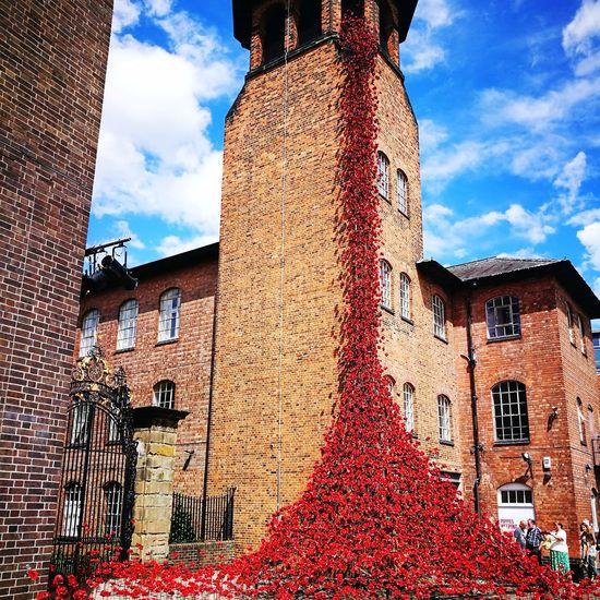 Poppies at Silk Mill, Derby, Nottingham, United Kingdom
