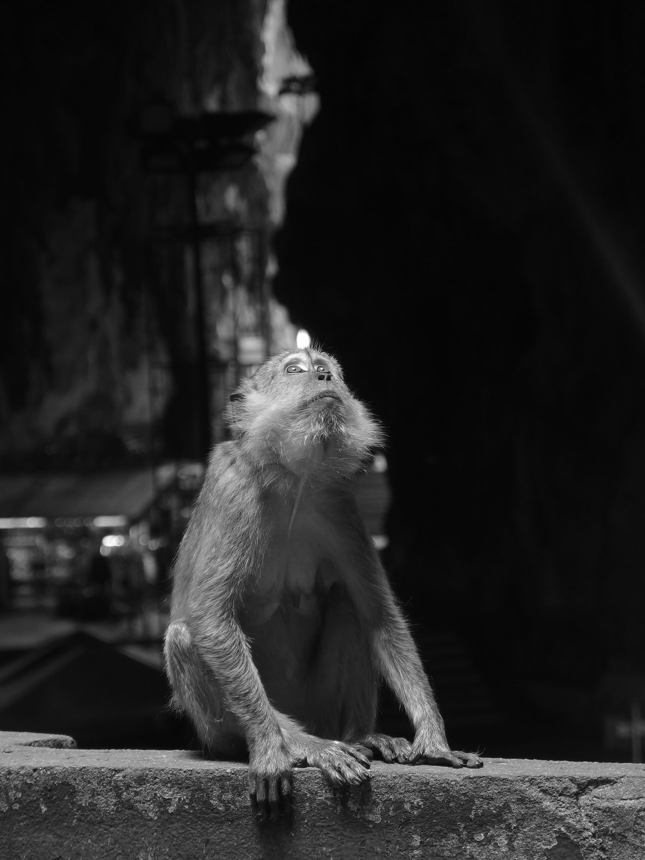Animal Themes Batu Caves Batu Caves -Malaysia Blackandwhite Cave Caves Curiosity Monkey Nature One Animal Rock