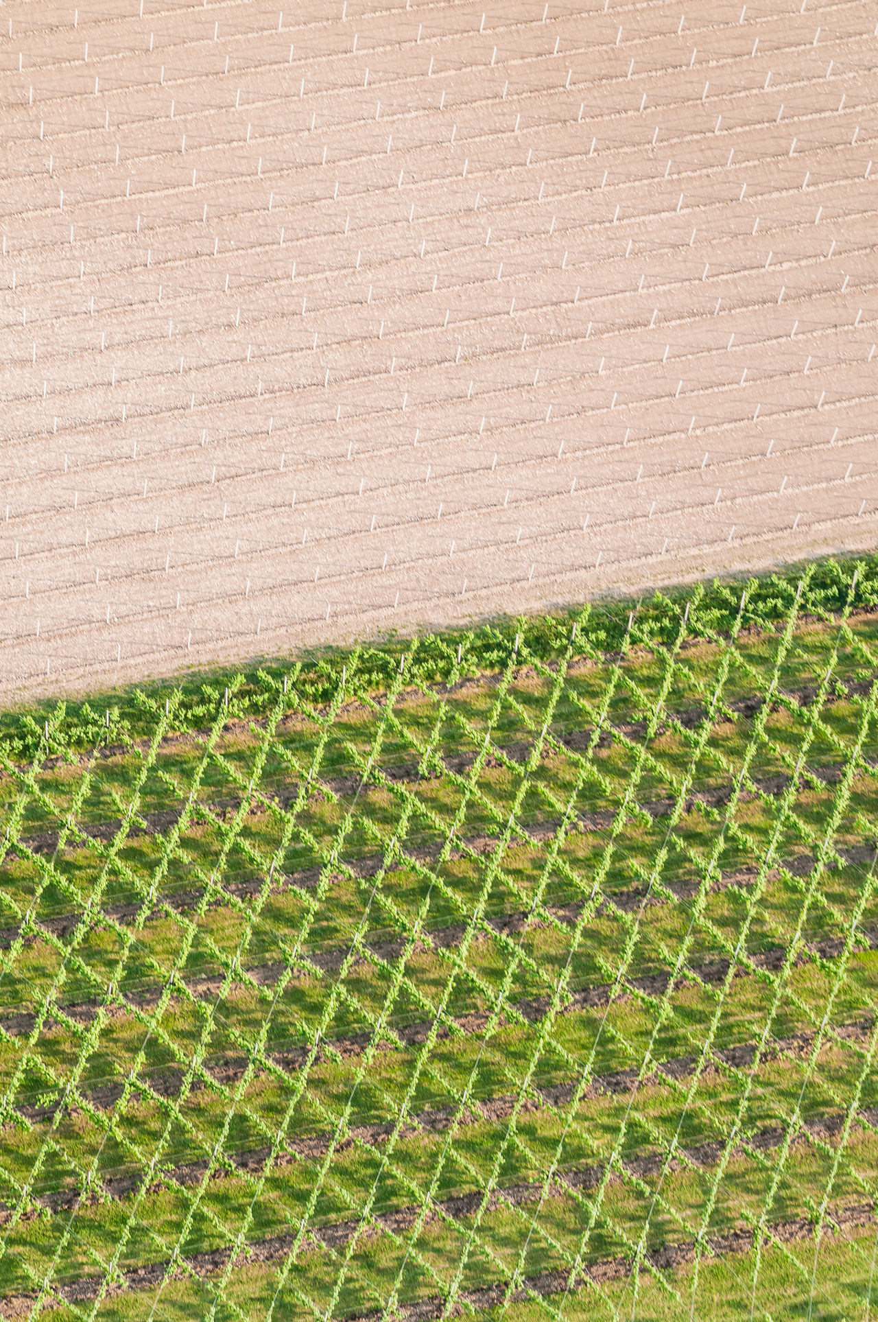 Aerial Photography Agricultural Land Flying High Grass Green Green Color Italy Nature Prosecco Prosecco Land Veneto