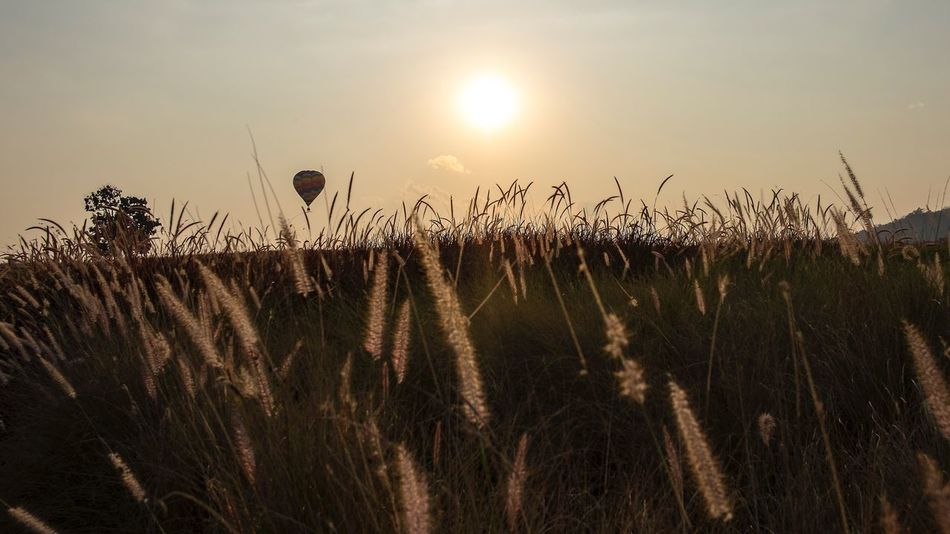 Floating alone Nature Field Sky No People Beauty In Nature Sunset Landscape Cloud - Sky Transportation Journey Flying Balloons Balloonfiesta