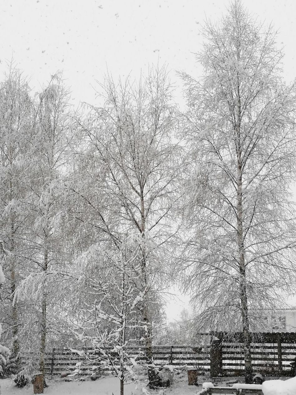 Winter In April Day No People Full Frame Pattern Backgrounds Outdoors Winter Nature Tree Snow Sky Close-up