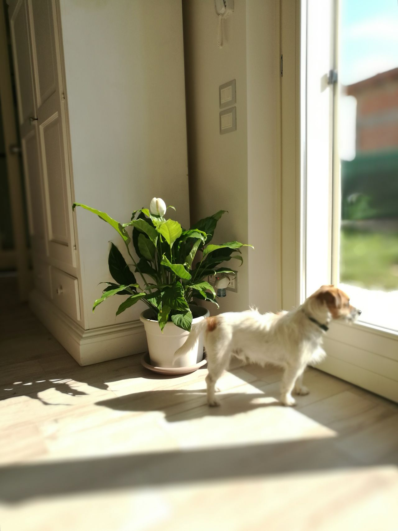 Dogs Of EyeEm House Plant Pensieroso Inside The House Thinking About You Thinking About.. Thinking Of You Waiting Waiting For You Waiting For Someone