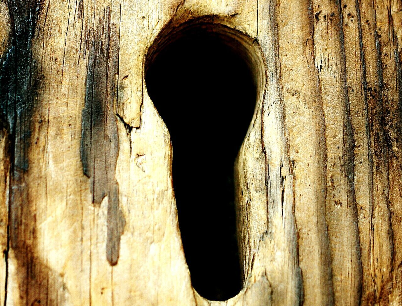 hole, wood - material, textured, day, tree trunk, no people, close-up, built structure, outdoors, architecture, hinge, nature