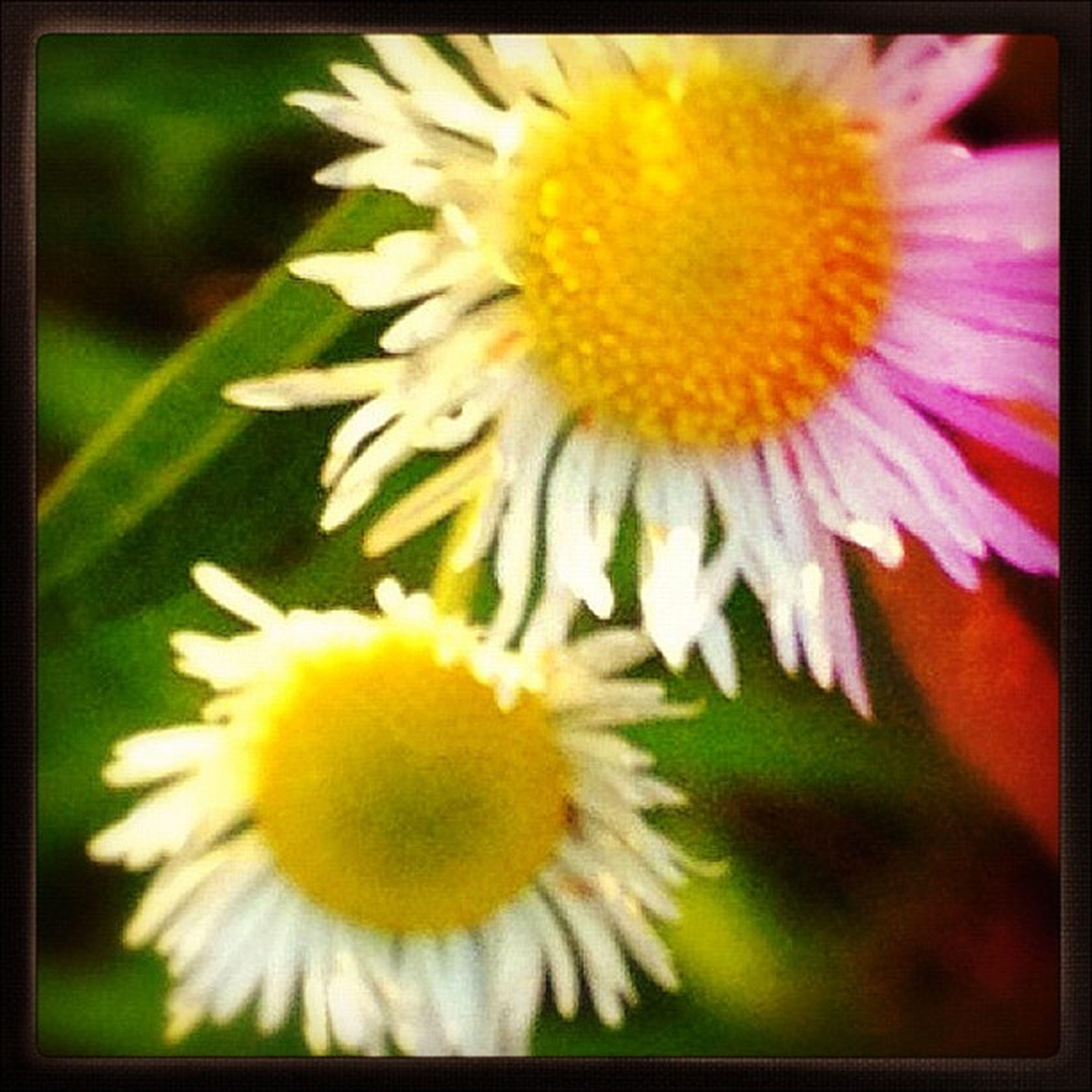 #flowers #gentle #serenity #macroflowers #macro #macroporn #flowerporn #garden #iphone4s Garden Macro IPhone4s Serenity Flowerporn Gentle Macroporn 19likes Macroflowers Flowers