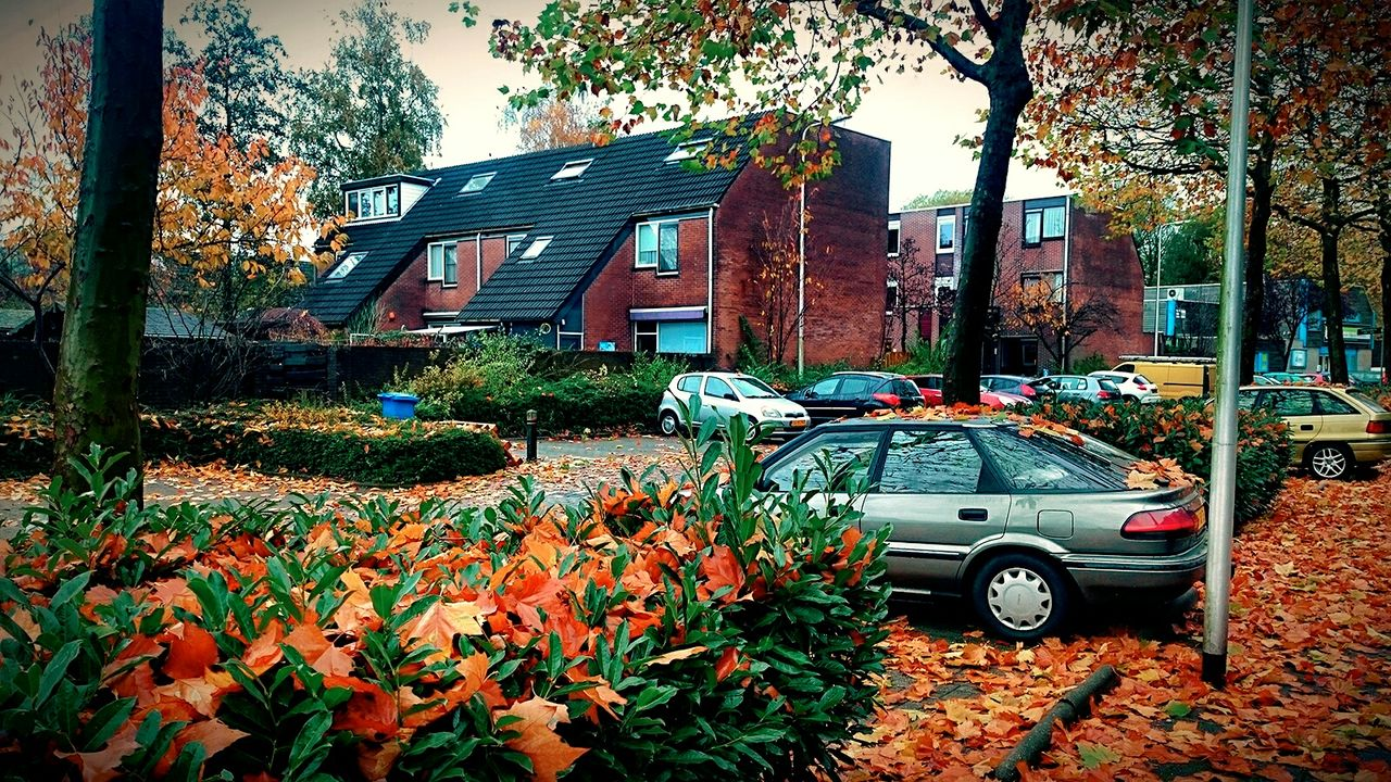 autumn, leaf, tree, change, car, outdoors, day, nature, growth, flower, no people, built structure, plant, building exterior, beauty in nature, architecture, sky