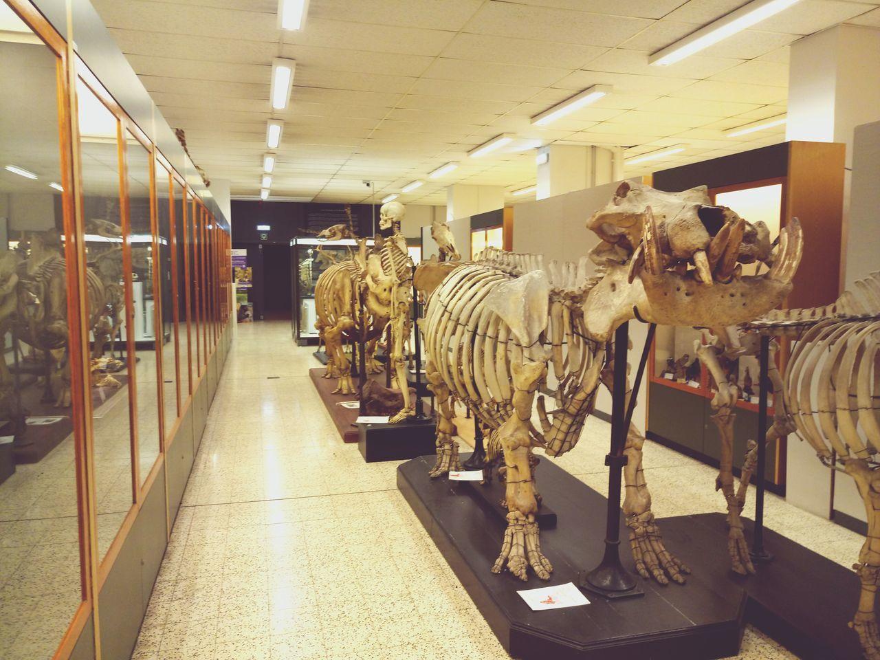 Statue Zoology University Brussels No People Biology Skeleton зоологическиймузей