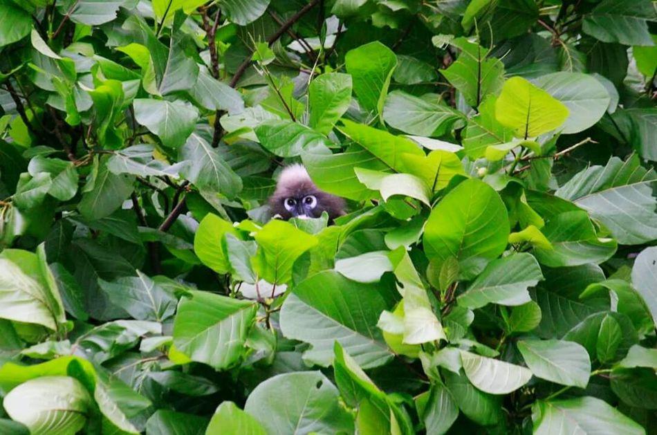 Monkey Cute Memories Love Thailand Tree Green Animals In The Wild 2013