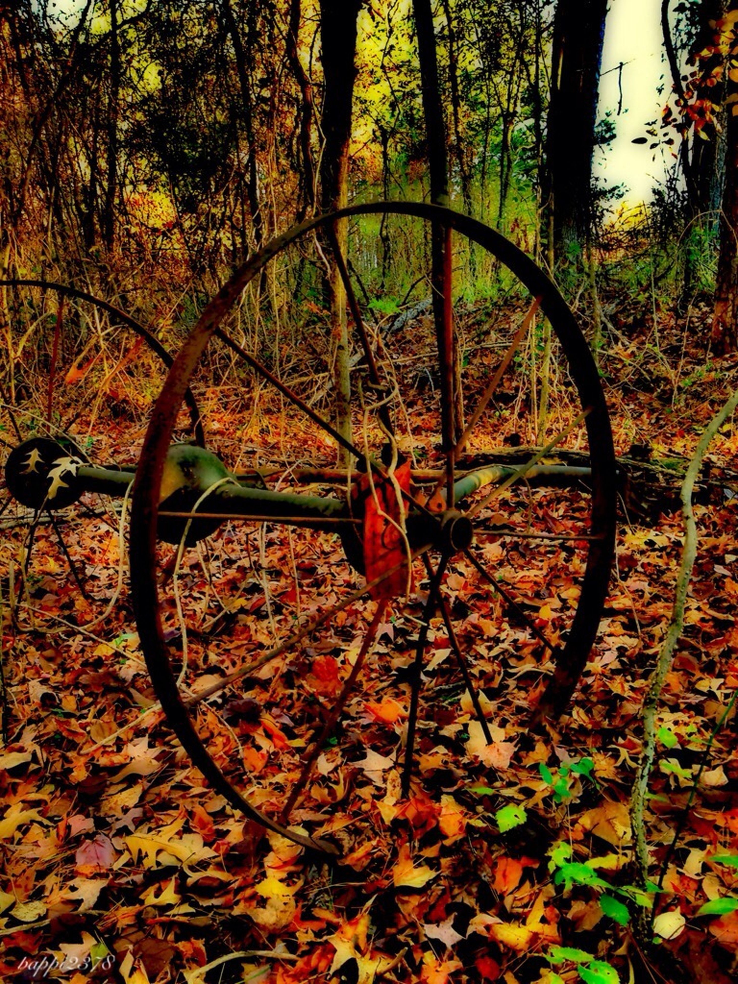 autumn, bicycle, tree, transportation, change, land vehicle, leaf, mode of transport, orange color, growth, season, plant, wheel, nature, tranquility, dry, fallen, day, stationary, outdoors