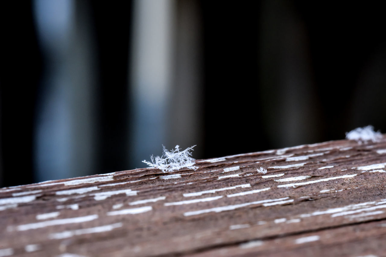 Tiny Wonders Cold Temperature No People Frozen Winter Close-up Nature Snow Beauty In Nature Day Ice Snowflake Refraction Bradleywarren Photography Bradley Olson Christmas Outdoors Chicago Snowing Winter Holiday Close Up Macro Flakes Flake Snow Day