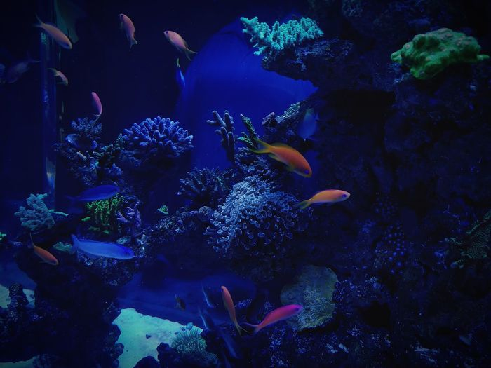 Aquatic Life Aquarium Photography Blue Water Frost Musuem Galaxy S8+ Nature Nature Photography