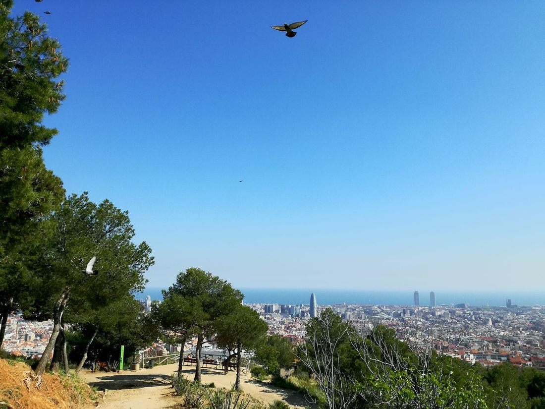 Flying Clear Sky Outdoors Nature No People Sky Beauty In Nature Day Birds In Flight Flying High Animal Themes Catalunya BCN Barcelona Sunny☀ Sea Mediterranean  Barcelona Lost In The Landscape