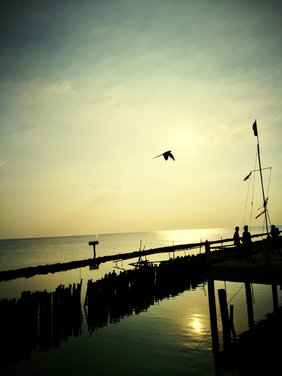 sunset, silhouette, bird, nature, water, beauty in nature, animal themes, animals in the wild, flying, sky, scenics, one animal, tranquility, animal wildlife, reflection, tranquil scene, outdoors, sea, mid-air, no people, spread wings, day