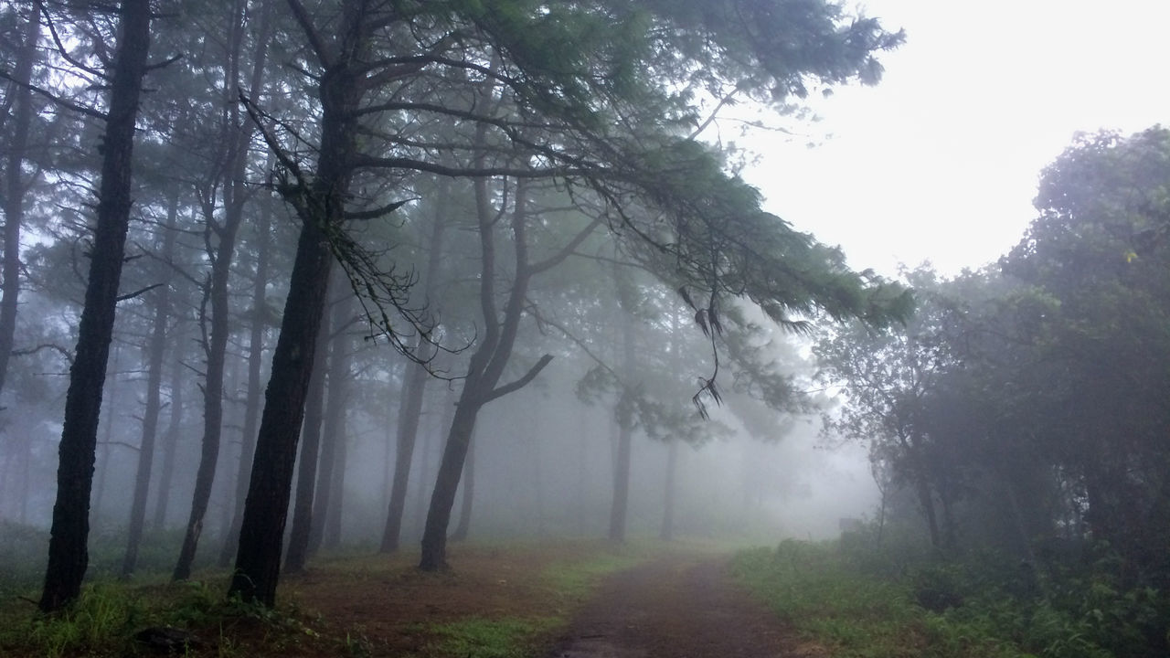 fog, tree, nature, forest, landscape, beauty in nature, mist, scenics, no people, day, outdoors, branch