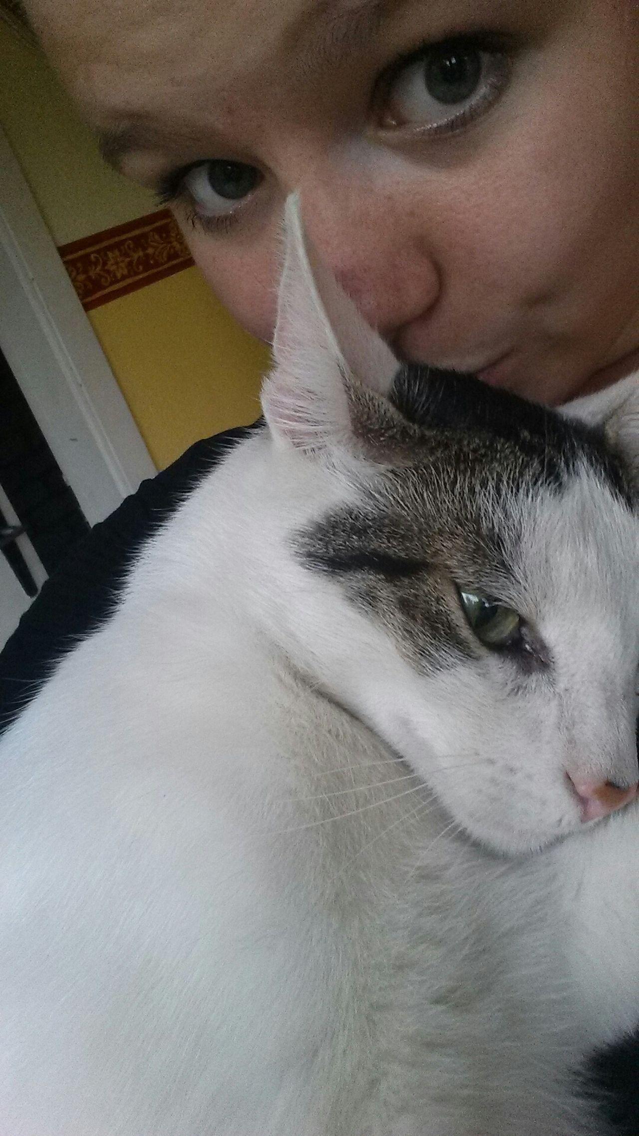 No Filter Cat Tierheimamsee Love